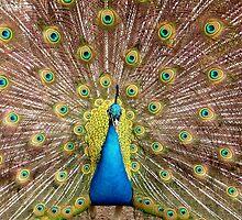 Peacock by Aviana