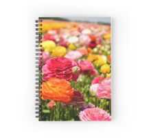 ield of multicolor cultivated Buttercup (Ranunculus) flowers Spiral Notebook
