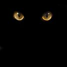Cat Eyes by itsmattb