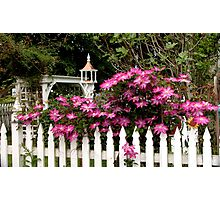 Beyond the picket fence Photographic Print
