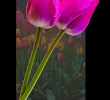 Tulips In A Frame by Marvin Mast