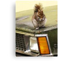 I Paid Good Peanuts For This Headlight... Canvas Print