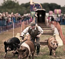 Piggies by Alexander Bampton