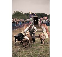 Piggies Photographic Print