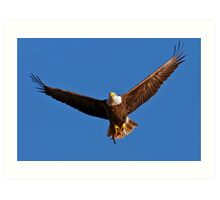 Bald Eagle with Fish Art Print