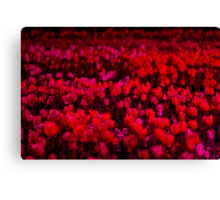 Red Field - Floriade Nightfest, Canberra Australia. Canvas Print