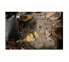 Scuba Divers uncover a hoard of 2000 gold coins from the Fatimid period Art Print