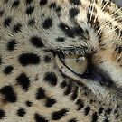 The eye of the leopard by jozi1