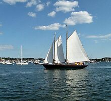 Sails Coming Home to the Harbor by Jane Neill-Hancock
