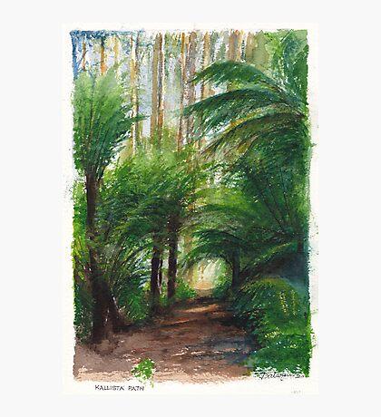 Kallista Rainforest Path Photographic Print