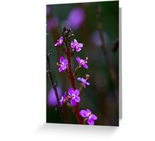 Trigger plant, A77  Greeting Card