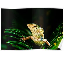 Common garden lizard Poster