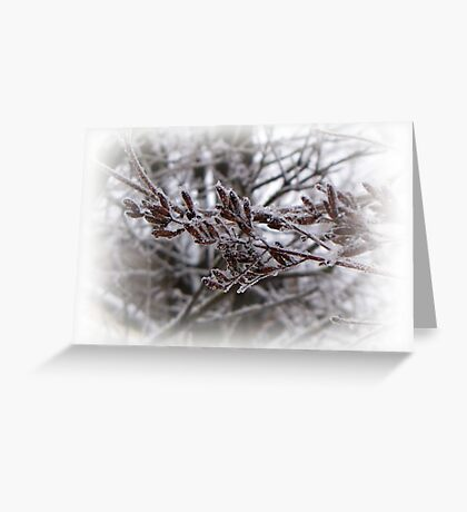 Winter Sketches Greeting Card