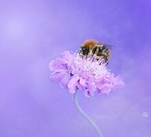 Bee and flower by franceslewis