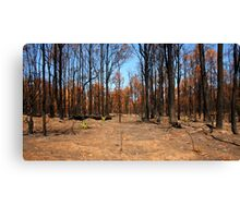 After the Fire - Regeneration Canvas Print
