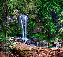 Curtis Falls - Mt Tamborine by Maxwell Campbell