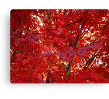 Fall Fire ^ Canvas Print