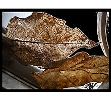 Veins Before Decay Photographic Print