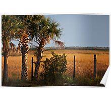Palm Tree On Coast Poster