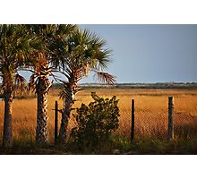 Palm Tree On Coast Photographic Print