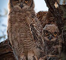 Verreaux's Eagle-Owl by Rashid Latiff