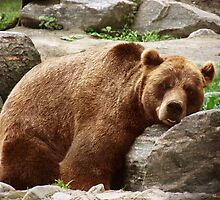 Resting Brown Bear by Norman Rawn