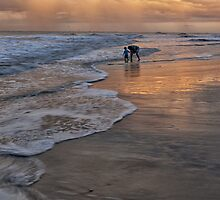 Exploring the Beach by jimcrotty