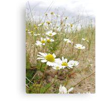 White n Yellow Lisfannon beach County Donegal Ireland Canvas Print