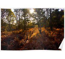 Dunwich Heath Forest Scene Suffolk Poster