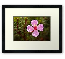Volcanic flower after the Rain Framed Print