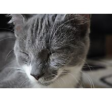 Cat Beauty Photographic Print
