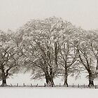 Winter Trees by Lynne Morris