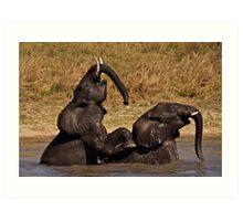 Elephants playing Art Print