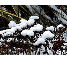 Snow Coated Photographic Print