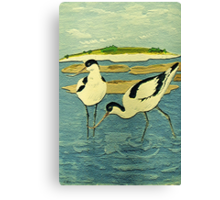 Avocets Canvas Print
