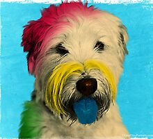 Colorful Pop Art Poodle who Looks Like Albert Einstein  by ibadishi