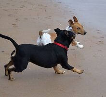 Tilly & Rocky by Lindabloomfield