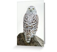 Turn around Snowy Greeting Card