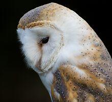 Barn Owl Portrait by Ellesscee