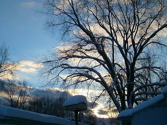 Winter Wonderland at Sunset by Jane Neill-Hancock