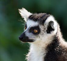 Lemur by Ellesscee