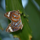 Duo of Butterflies by GRoyer