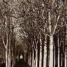 Grove by Sherilyn Hawley