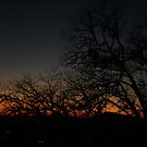 Sunset Silhouette  by SKNickel