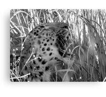 Yawning Cheetah Canvas Print