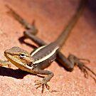 """Dragon"" Kalbarri National Park, Western Australia by wildimagenation"