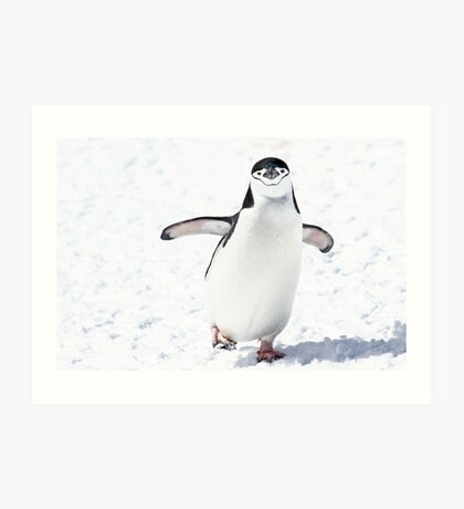 Chinstrap penguins (Pygoscelis antarctica). These birds feed almost exclusively on krill. Art Print
