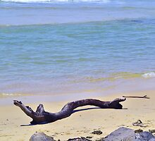 Driftwood on the Beach by Jess Jones