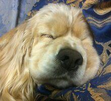 Sleeping Maggie by maggiepoohbear