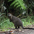 Wallaby by BlackSunshine